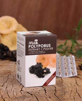 Polyporus Extrakt + Pulver